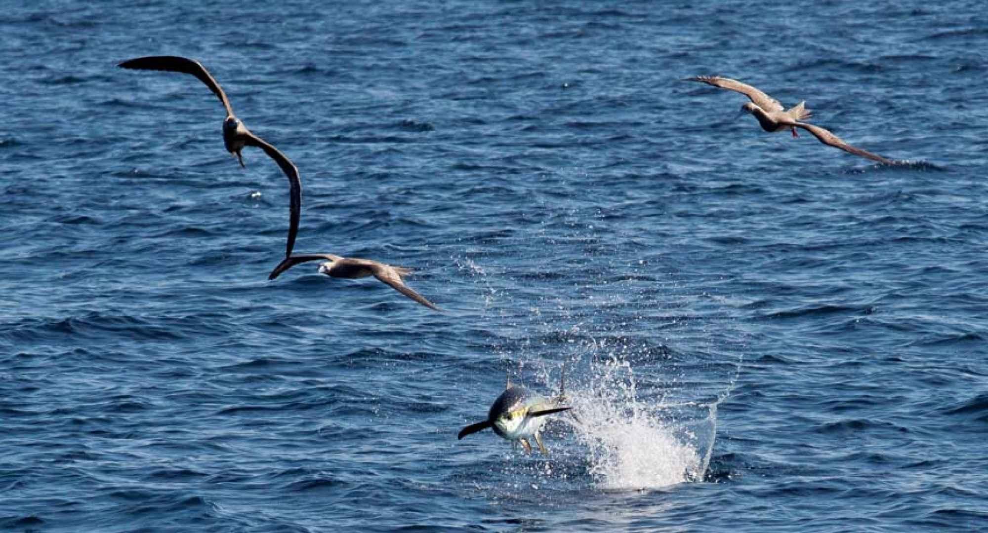 radar-birds-tuna